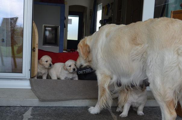 Mama Jane macht ihren Babys Mut