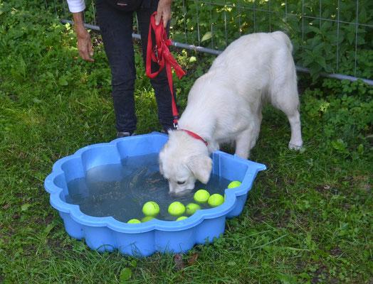 Anouk taucht nach gefüllten Tennisbällen