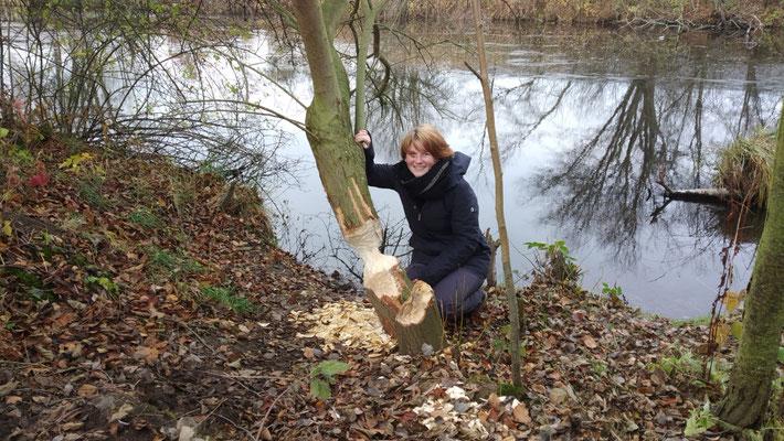FÖJ'lerin Svenja entdeckt einen frische angenagten Baum.