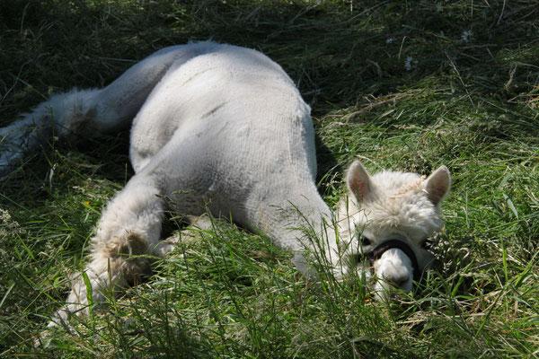 Mittagsschlaf in der Sonne