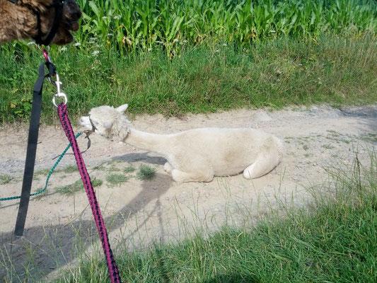 Heidi nimmt ein kleines Bad auf dem Feldweg