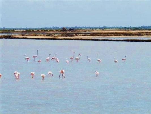 flamingo in2kenya