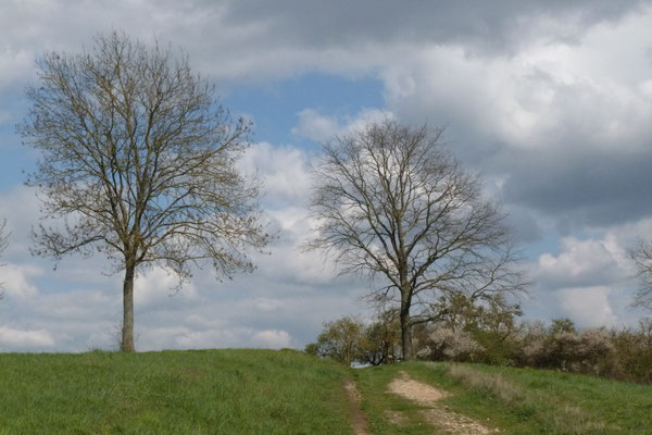 Bleidenberg bei Niederbrechen (Foto © Renate Fachinger)
