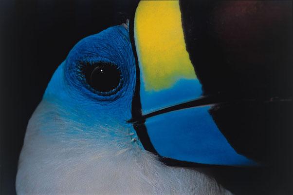 faune péruvienne