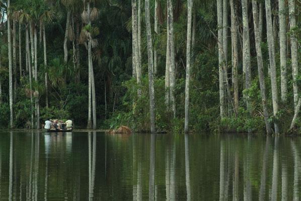 Nature péruvienne