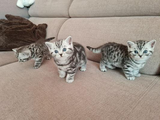 Minerva, Murphy und Merlin