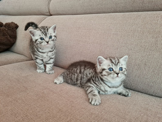 Merlin und Marcie