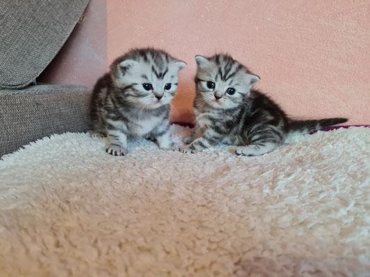 Mailey und Merida