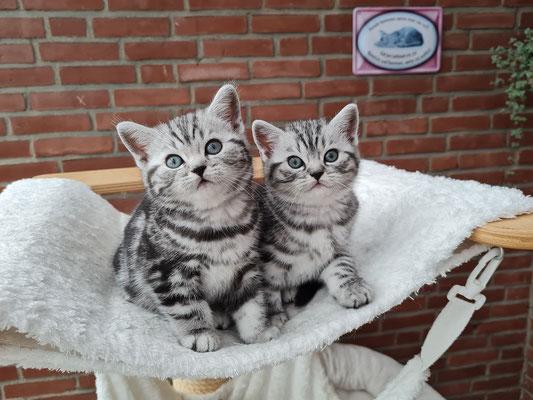 Murphy und Merlin