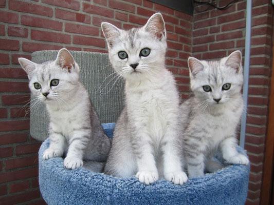 Frieda, Fiene und Filou