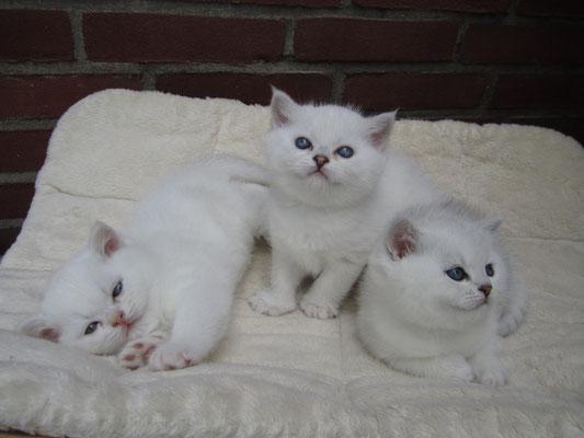 Irvin, Isaac und Ilay