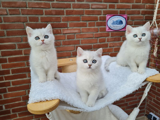 Kamilla, Kasper und Kleo
