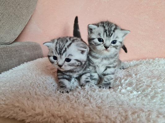Marcie und Merlin