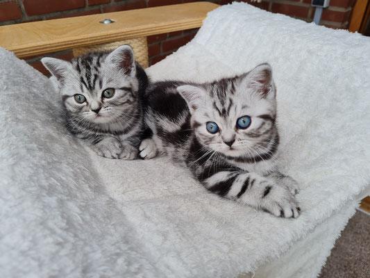 Merida und Mailey