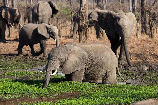 Elefantenbad im Camp