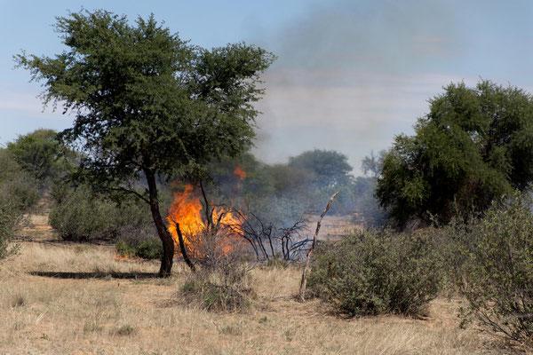 nahe Buschfeuer