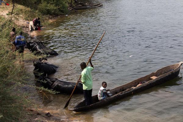 Tierwaschung im Fluss