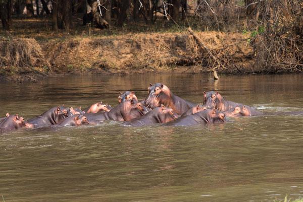 im Lower Zambezi NP