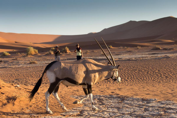 Oryx mit Damen