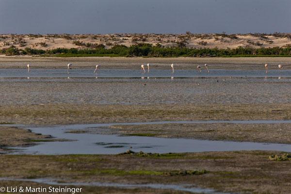 Lagune mit Flamingos