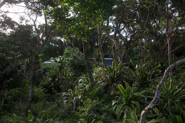 Suchbild am Campground: wo sind unsere Autos?