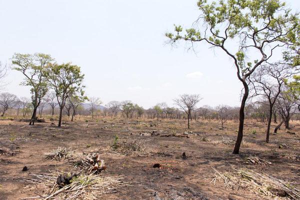 Brandrodung - wie lange hält das das Land aus?