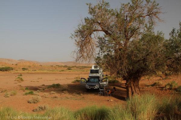 im Oued kurz vor der Oase Iche