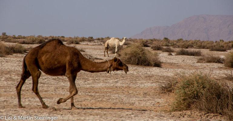 seltene Wüstenbewohner