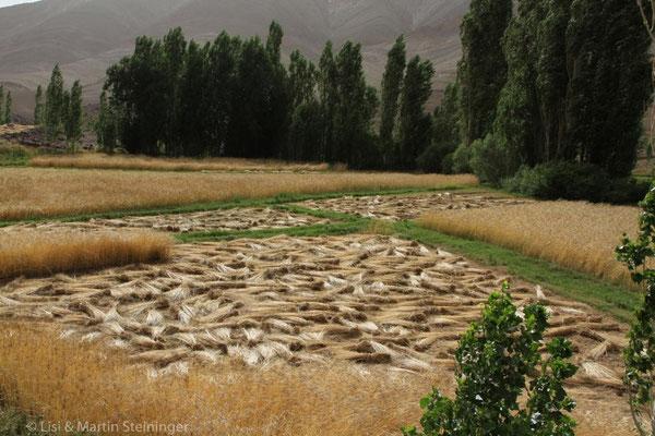 überall abgeerntetes Getreide