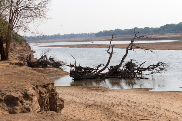 im South Luangwa NP