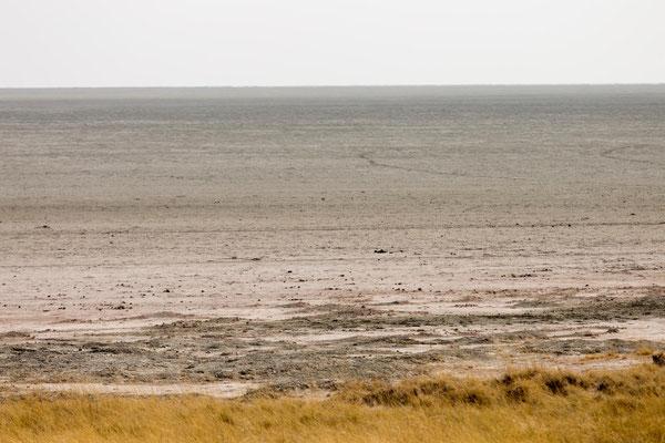 Etoscha - ein Salz- und Tonmeer
