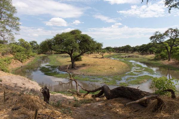 am River Khwai