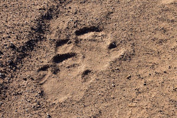 Spuren des black rhino