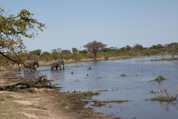 Rivercrossing am Khwai
