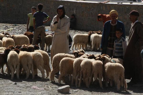 Viehmarkt in Imilchil