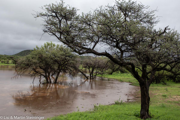 Brigadoon Jagdfarm nach dem Regen des Jahrzehnts