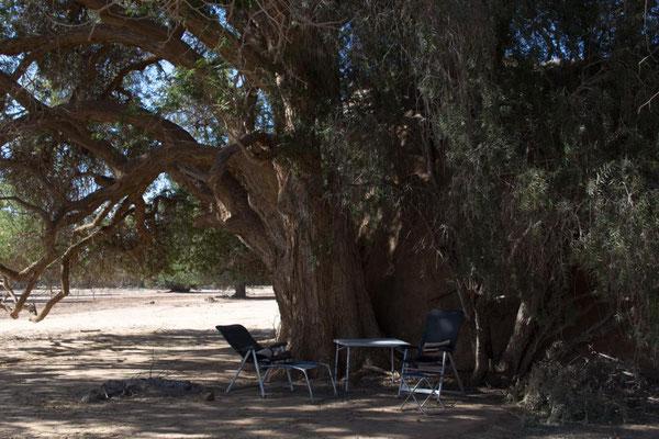 afrikanischer Schutzbaum als traumhafter Übernachtungsplatz