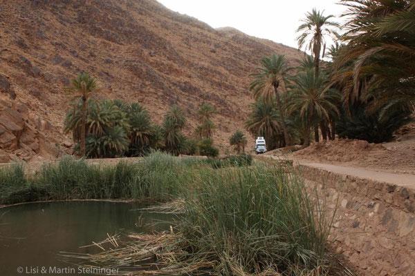 Standplatz im Palmengarten in Iche (mit Dank an Mohammed)