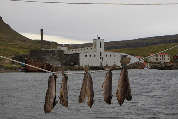 Fischfabrik in Dupavik
