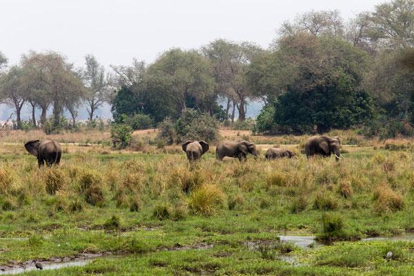 idyllische Szenen im NP am Zambezi