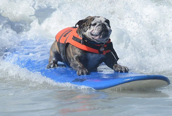 Funny Dog surfing. Fail