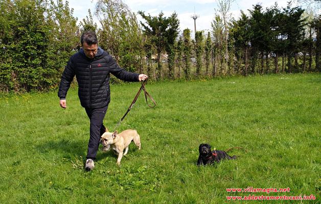lavoro in campo sul controllo del cane con distrazione