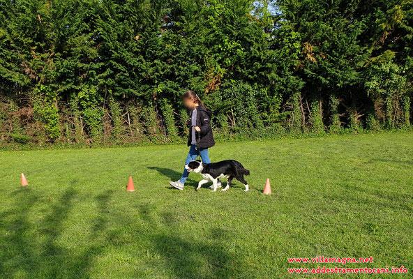 controllo del cane e gestione al guinzaglio