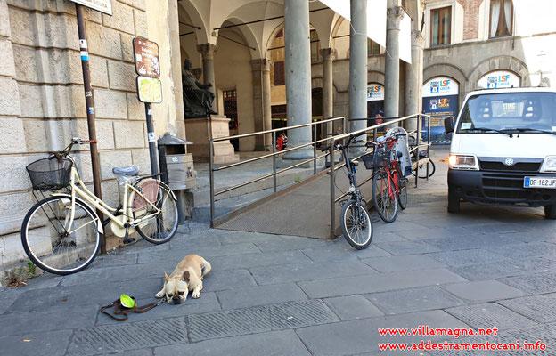 """esercizio del """"down"""" nel contesto urbano di Lucca"""