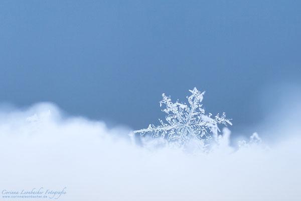 Januar 2021 - Eiskristall
