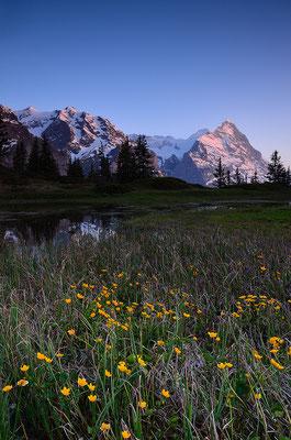 Grosse Scheidegg - Berner Oberland
