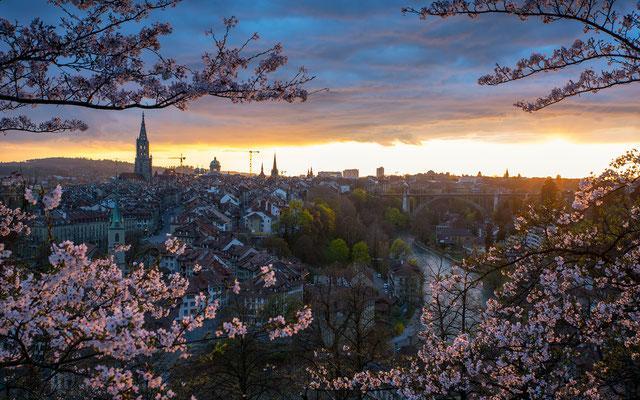 Kirschblüte in Bern