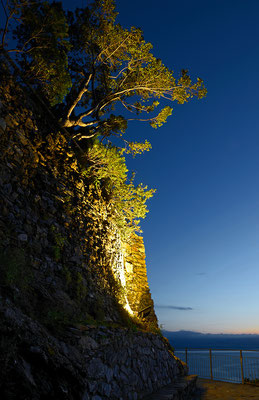 Illuminated Tree - Cinque Terre - Ligurien