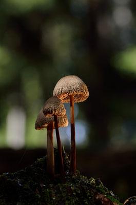 Kleine Pilzgruppe