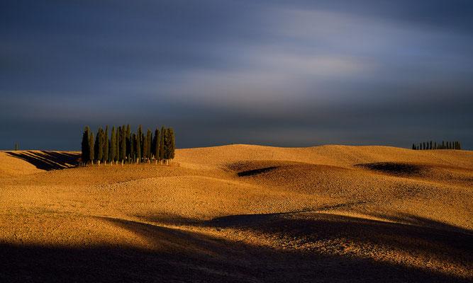 Il cipresso - Val d´Orcia - Toskana